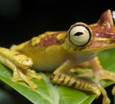 Biopiracy of Biodiversity
